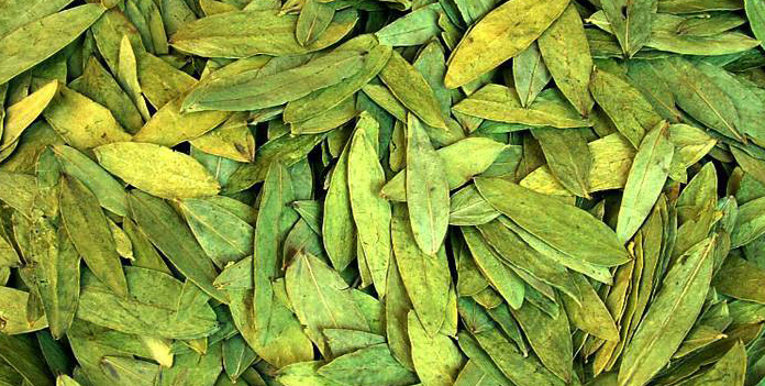 Cassia Angustifolia leaves
